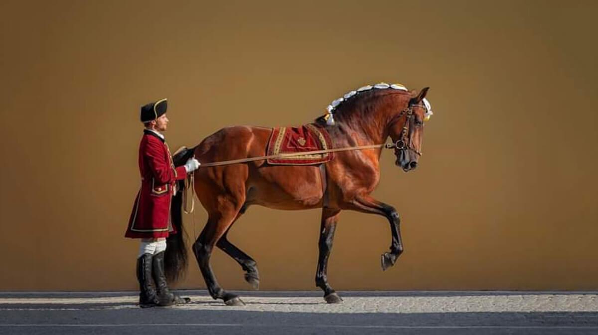 Equitación Portuguesa Clasificada Como Patrimonio Cultural Inmaterial